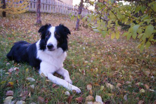 犬フィラリア症は定期的な投薬で予防できる