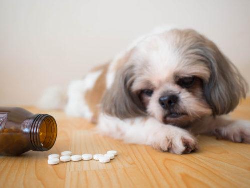 犬フィラリアの予防薬の種類