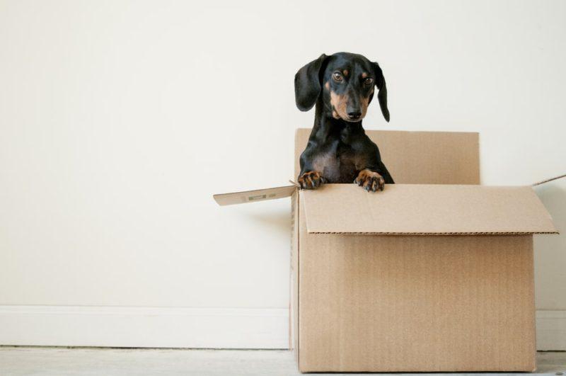 ペット医薬品の個人輸入代行サービスを利用する前に必ずチェック
