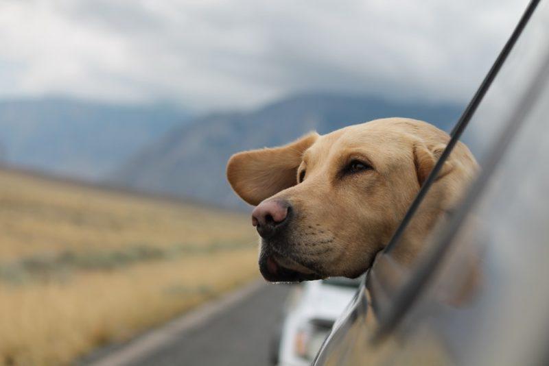 犬のフィラリア予防薬は高コスパのジェネリック医薬品で