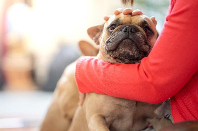 愛犬のフィラリア症の症状に気付いていますか?フィラリア検査は本当に必要?