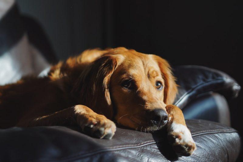 愛犬別おすすめフィラリア予防薬