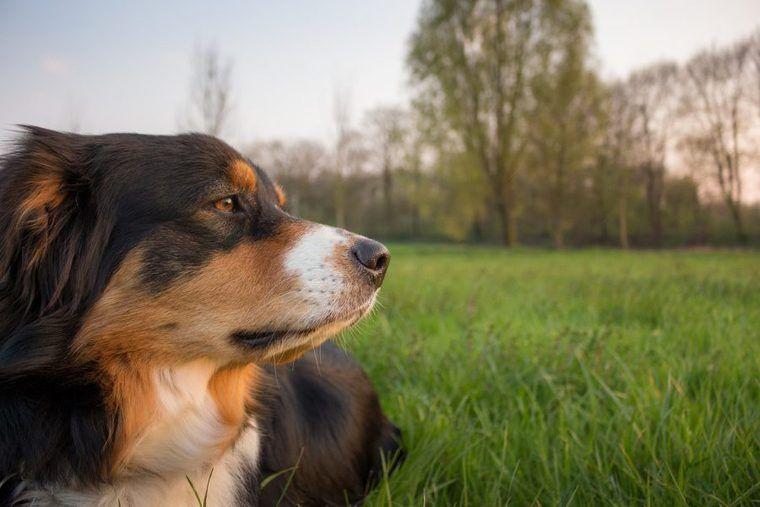 フィラリア予防は飼い主の義務!犬の死因トップはフィラリアだった