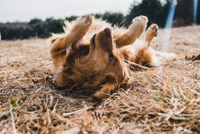 犬の平均寿命が延びている
