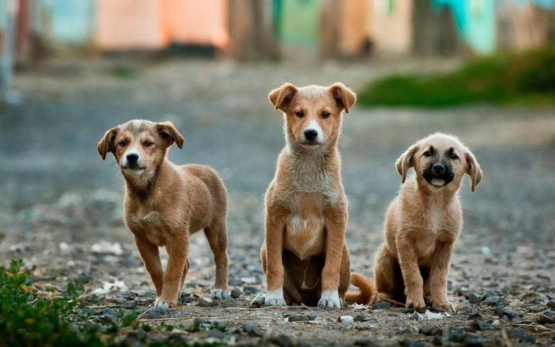 かつて犬の死因トップはフィラリアだった