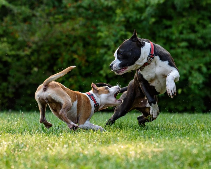 犬のフィラリア予防の普及率は?