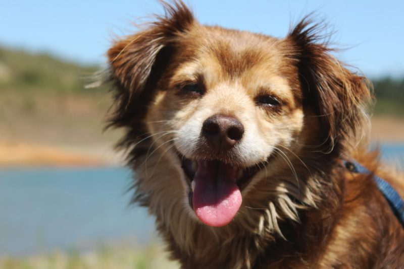 犬のフィラリア症の予防について