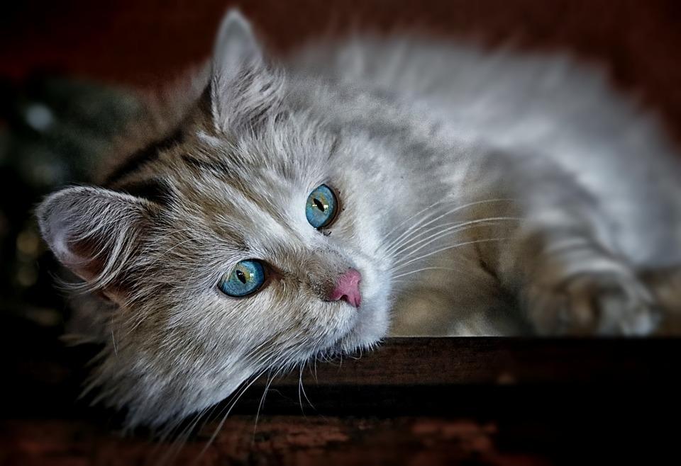 猫のお薬ベストセラー人気ランキング!