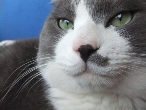 猫に与えてはいけない食べ物とは?