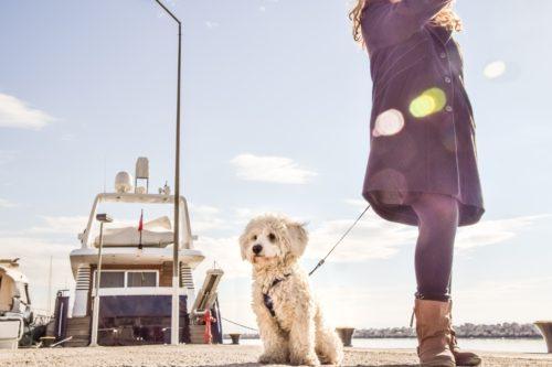 犬の病気と健康