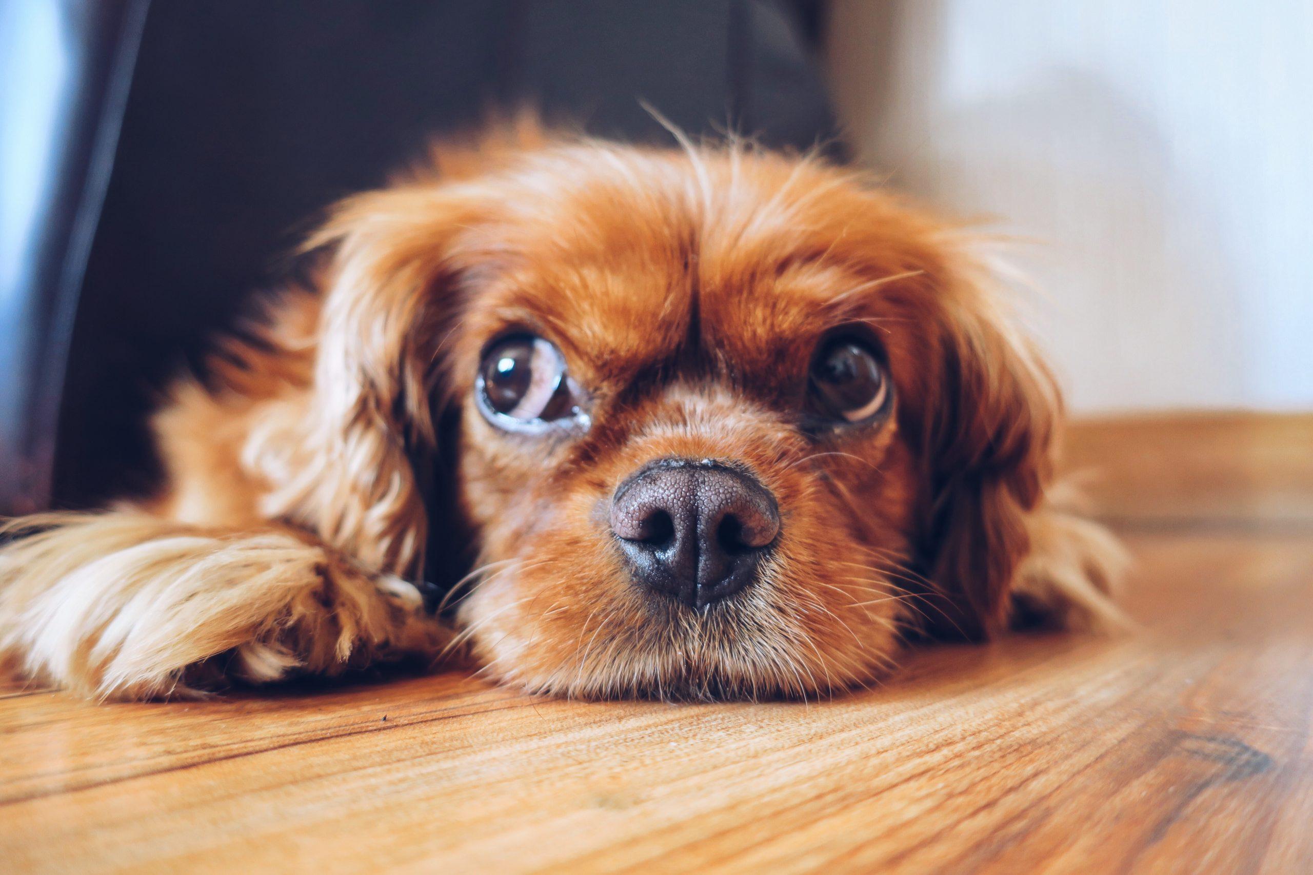 ペットくすりのサプリメントと犬の育て方のヒント