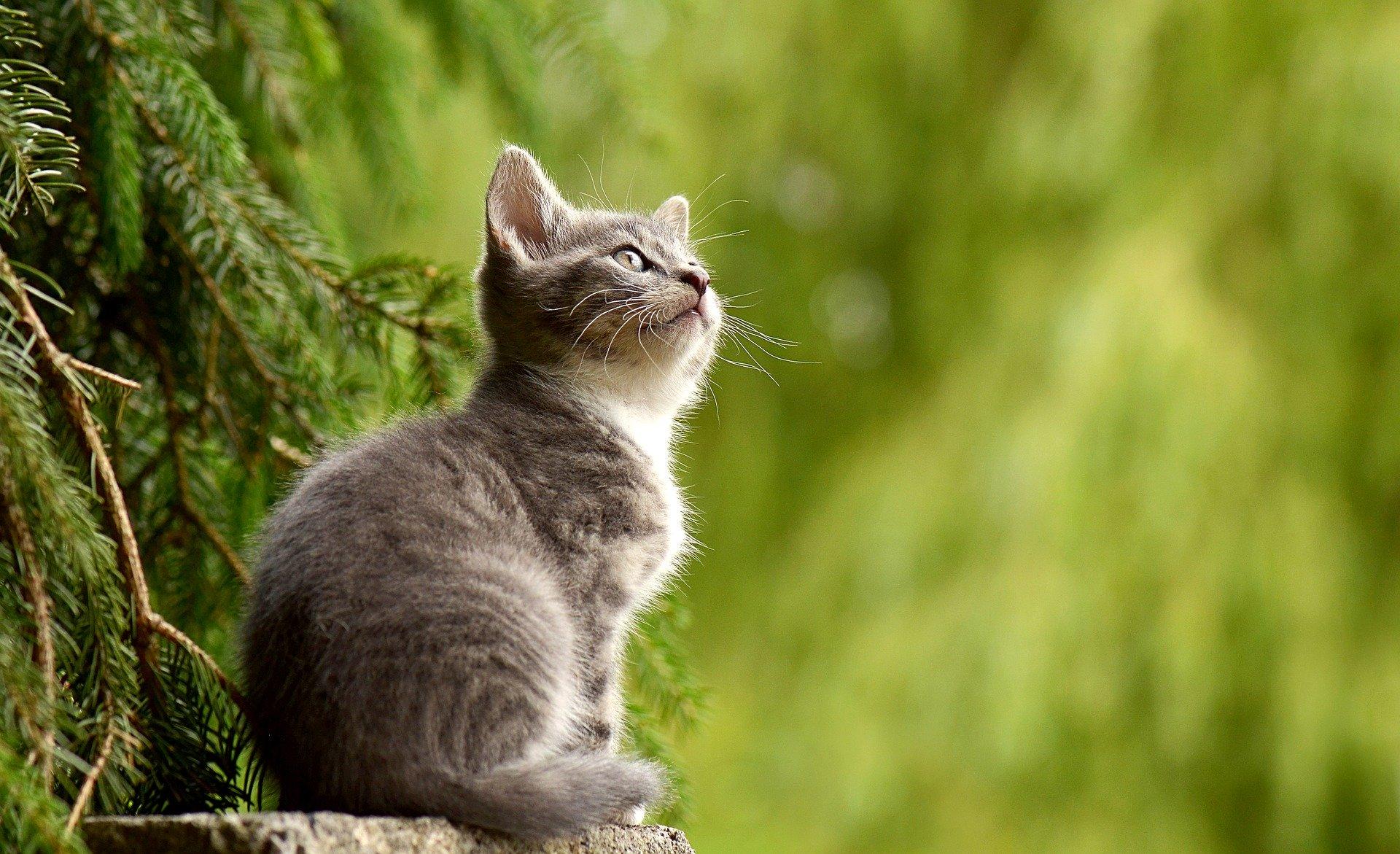ペットくすりでのノミ•マダニ駆除薬って結局何が一番いいの?(猫編)