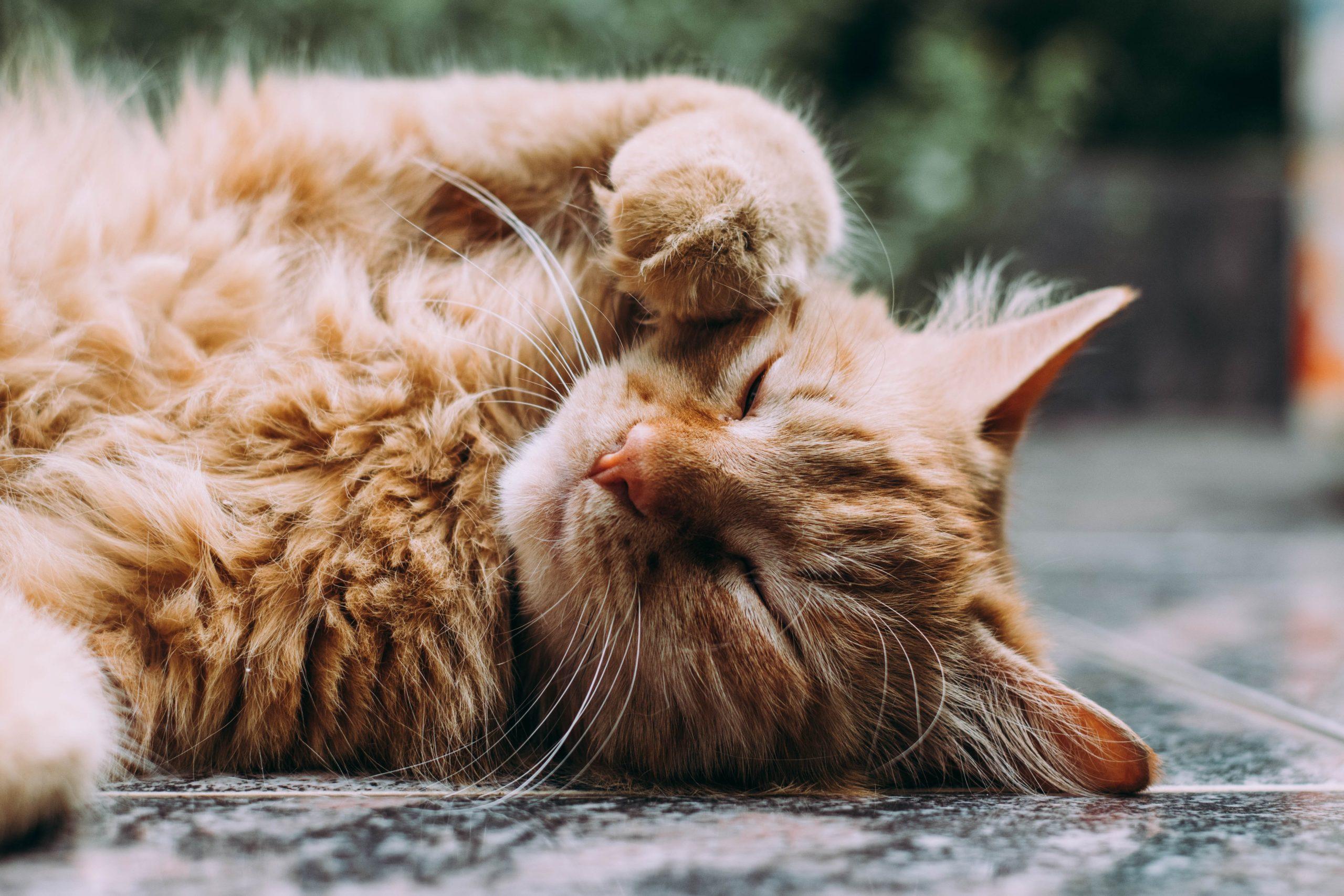 ペットくすりでの猫の病気の治療について