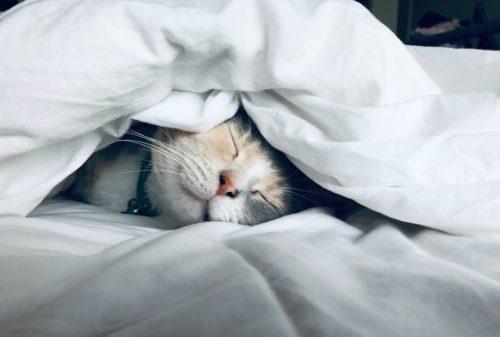 猫のフィラリア治療について