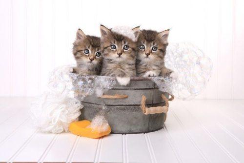 猫のシャンプーについて
