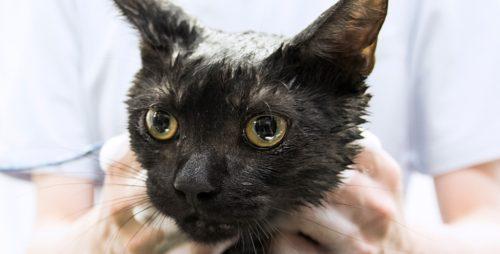 猫に無理やりシャンプーは危険