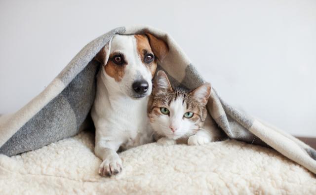 ペットと新型コロナウイルス感染症について
