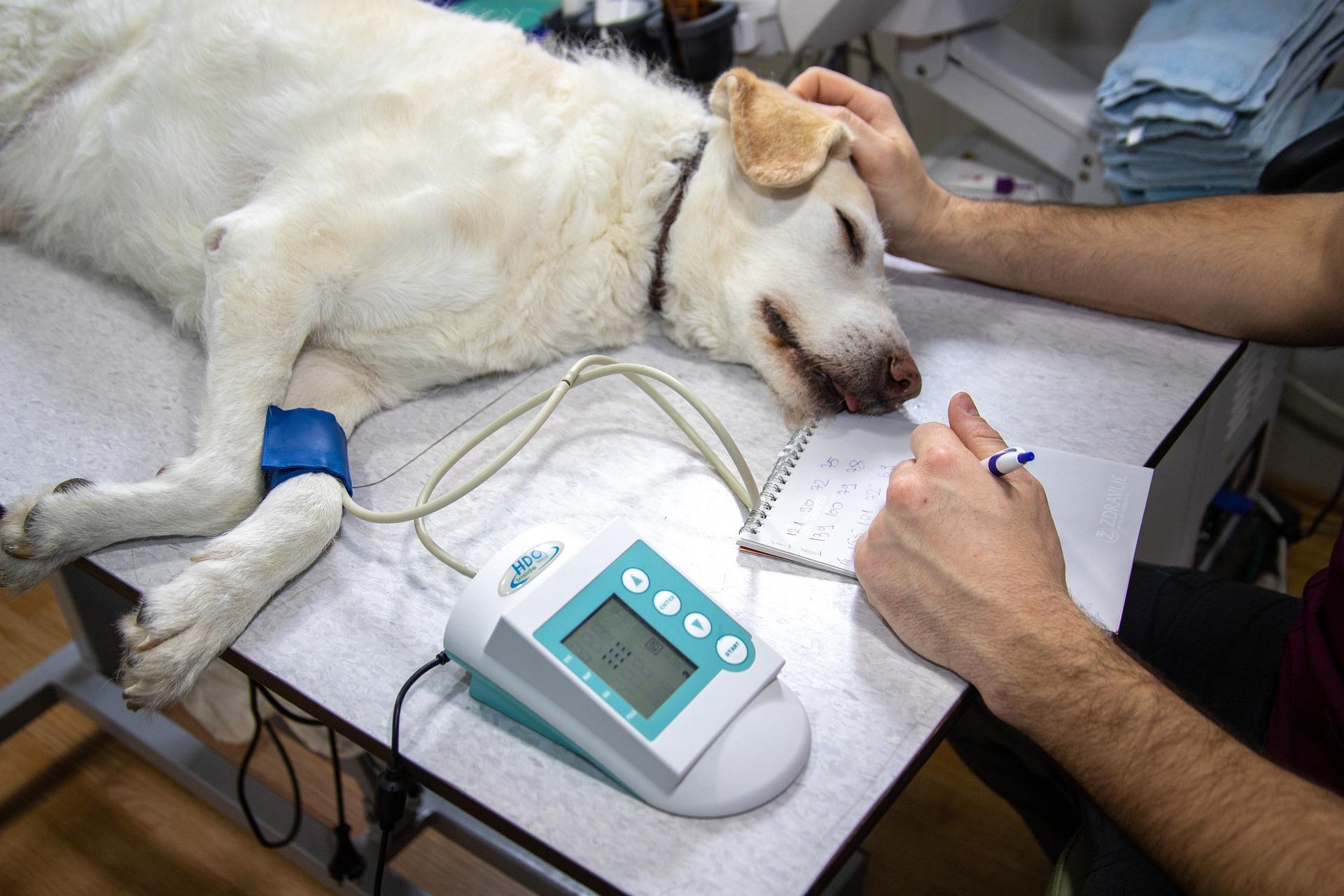 愛犬をフィラリア症から守るためにチェックすべき「3つの症状」