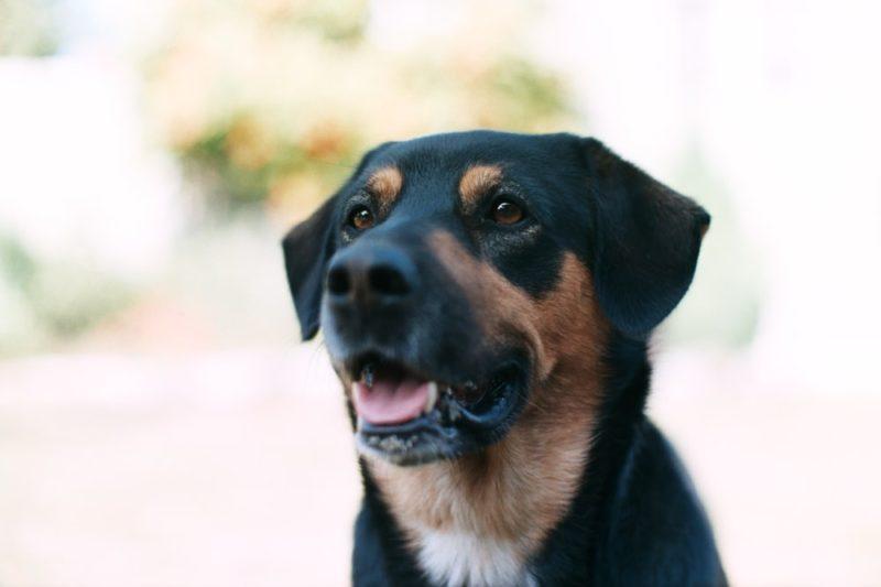 愛犬のフィラリア感染症の最大の対策は予防です