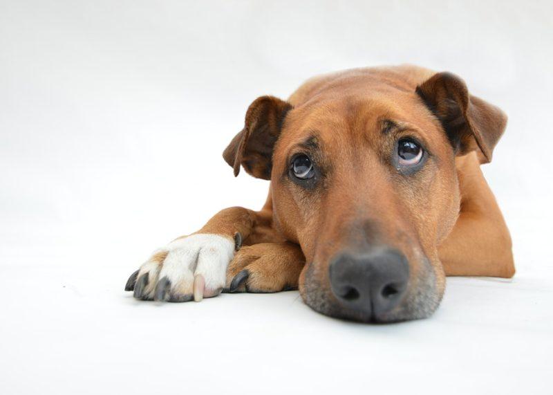 フィラリア症は犬の死因トップだった