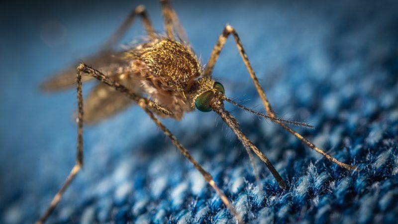 フィラリア予防薬の通年投与とは