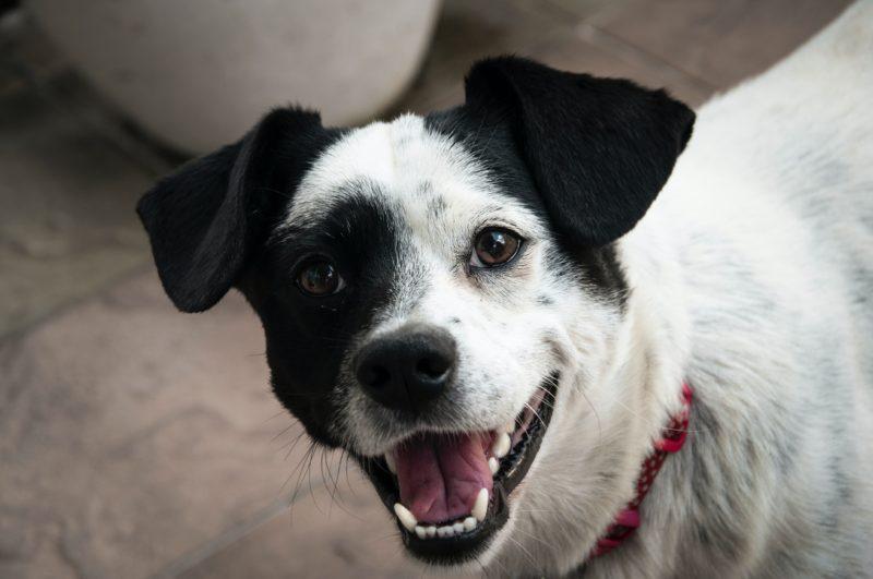 犬のフィラリア予防薬 最安値はこれだ!激安ベスト3ランキング発表!