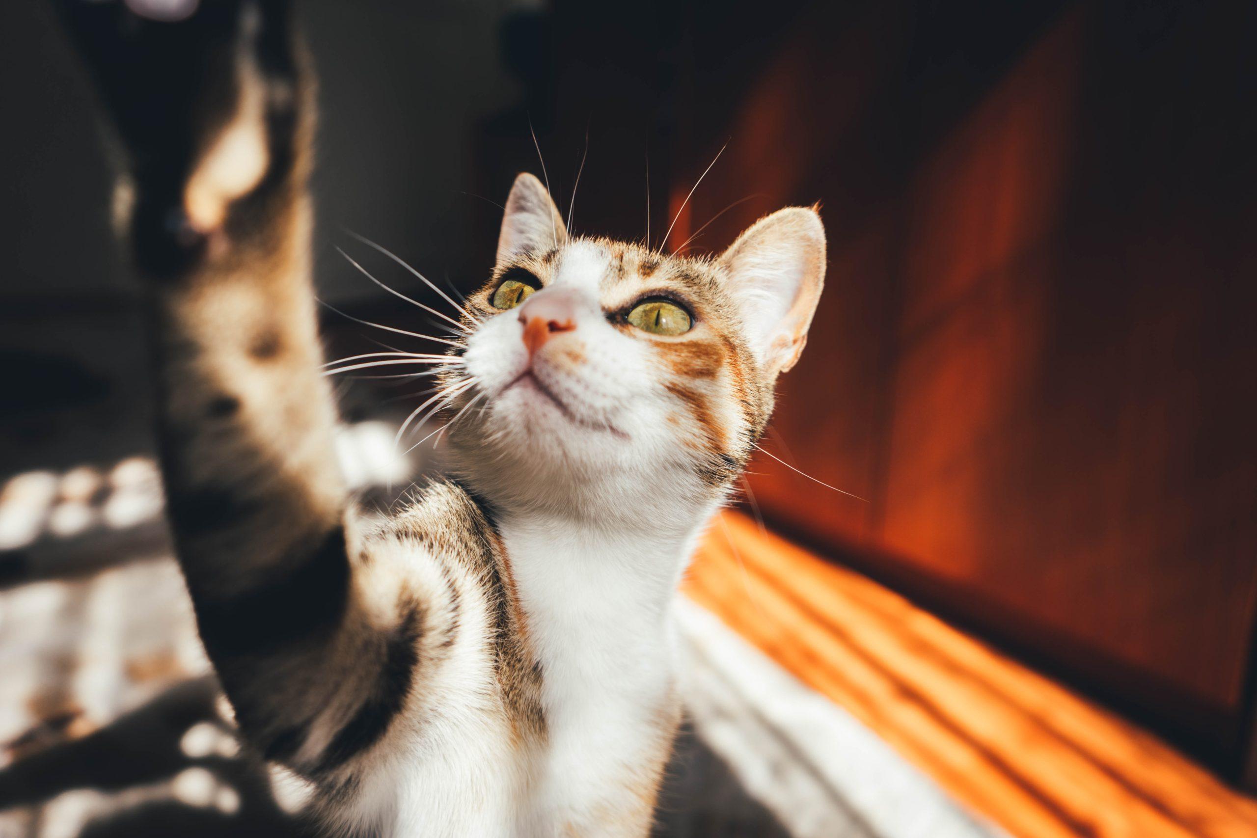 猫用オールインワンのフィラリア予防薬 最安値はこれだ!激安ランキング発表
