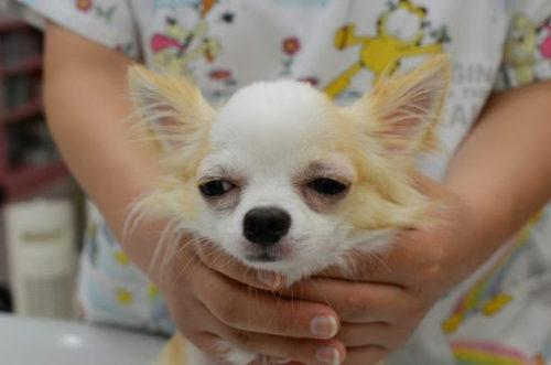 犬のアトピー性皮膚炎ってどんな病気?