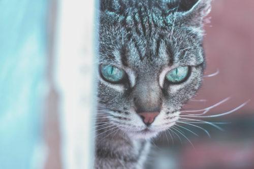 猫用フィラリア予防薬の最安値医薬品は「ペットくすり」で購入