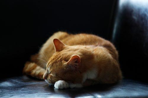 猫用オールインワンのフィラリア予防薬の最安値医薬品は「ペットくすり」で購入